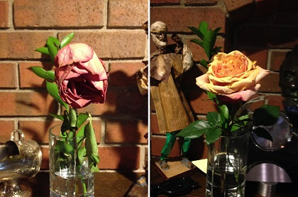 rose treatment